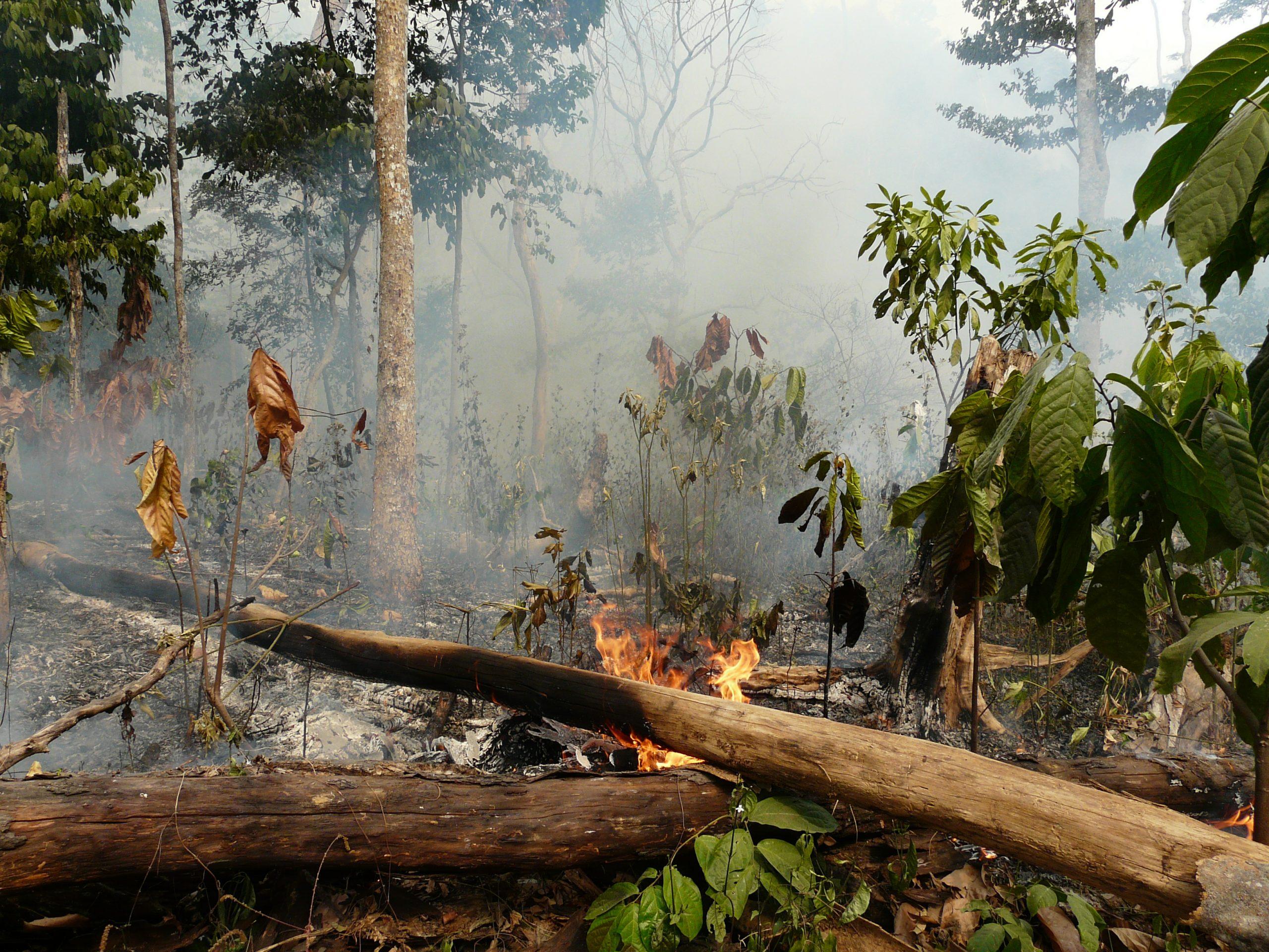 6_Ikemeh_habitatdestruction_February08