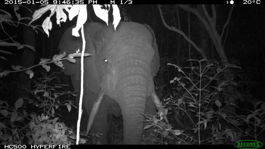 Camera_trap_elephant